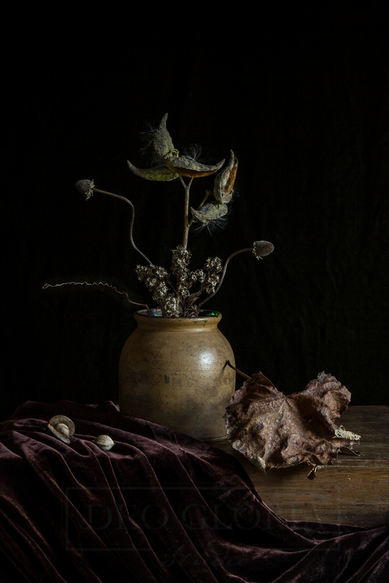 Still Life In Brown Tones